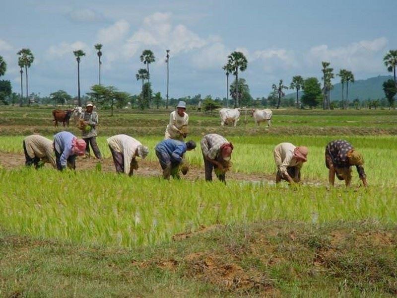 Image de Projet Angkor Bio Cogen de production d'électricité à partir d'enveloppe de riz
