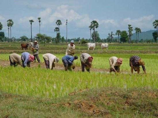 Imagen de Proyecto Angkor Bio Cogen de energía a partir de cáscara de arroz