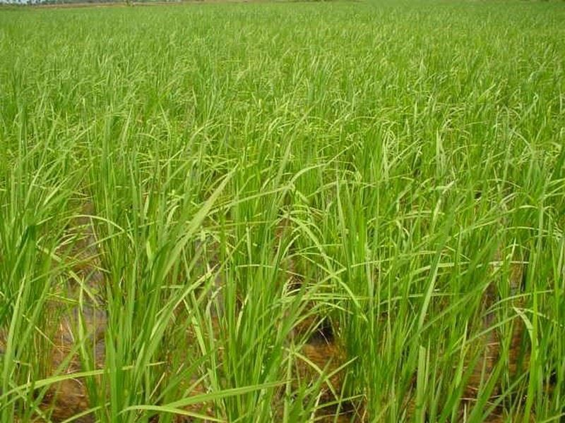 Picture of Angkor Bio Cogen Rice Husk Power Project
