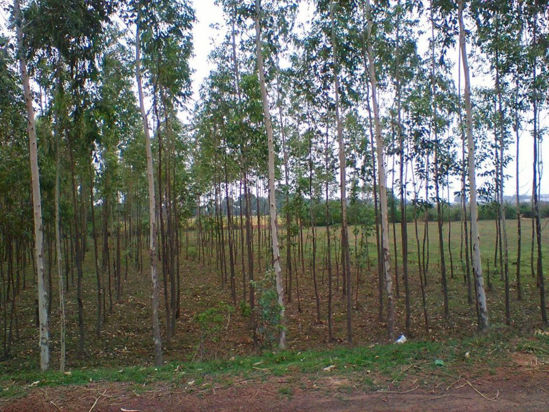 Picture of Reforestation of degraded land by MTPL in India